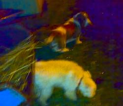 Agnes och Muffin i regnet