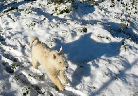 Muffin gillar snö!