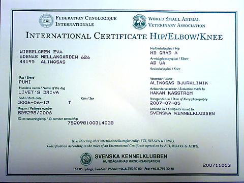 Certifikatet från kennelklubben
