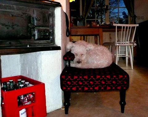 Muffin sover middag i soffan