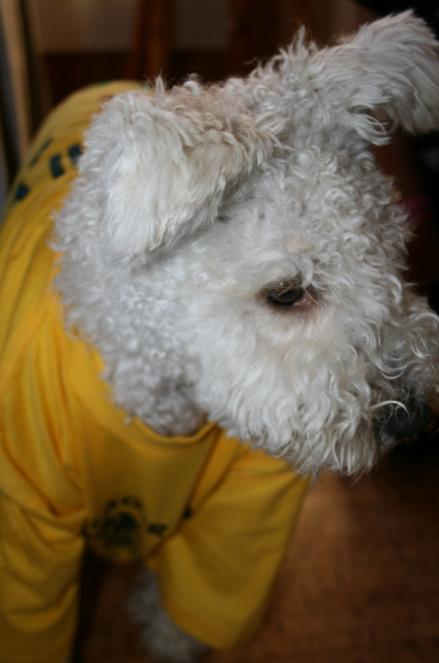 Alla fick varsin gul läger t-shirt, Muffin testar.
