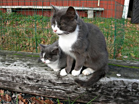 söta kissar!